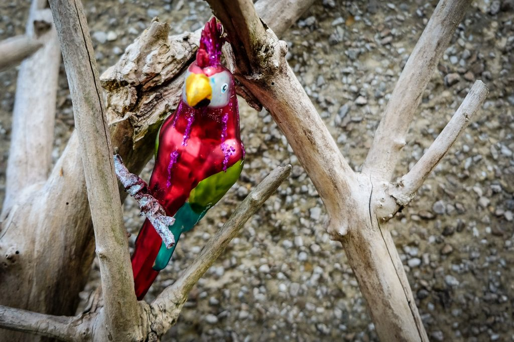Parrot Image